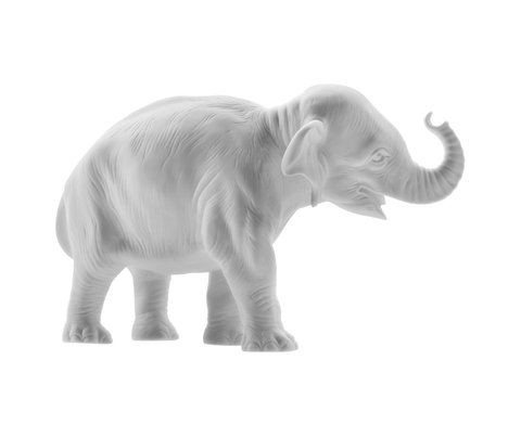 18.606_young_elephant_trunk_up_white_bis_main